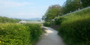 賀茂川散歩